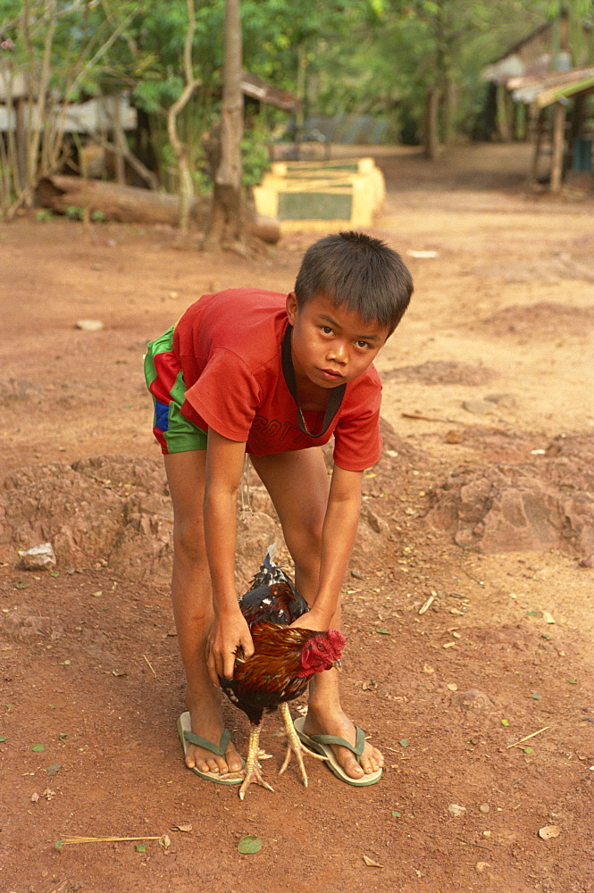 Child with chicken, Luang Prabang, Laos, Indochina, Southeast Asia, Asia - 2-20102