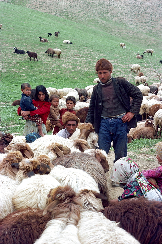 Turkoman shepherd and family with herd of sheep, Iran, Middle East