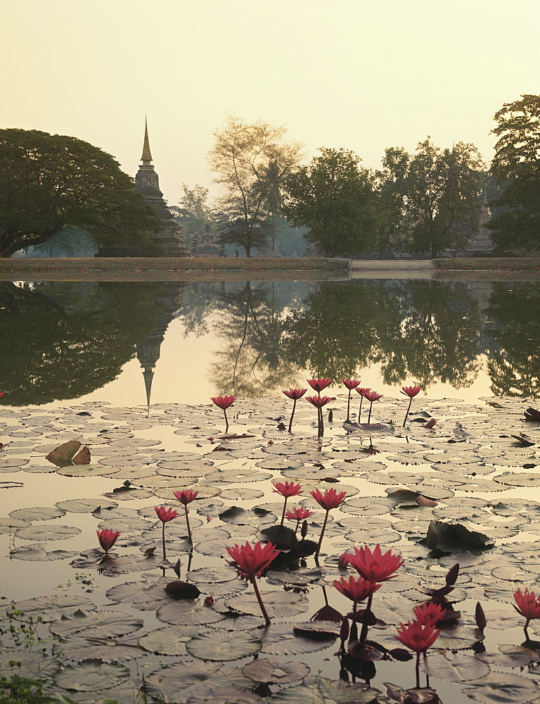 Waterlily in Sukhothai, Thailand, Southeast Asia, Asia
