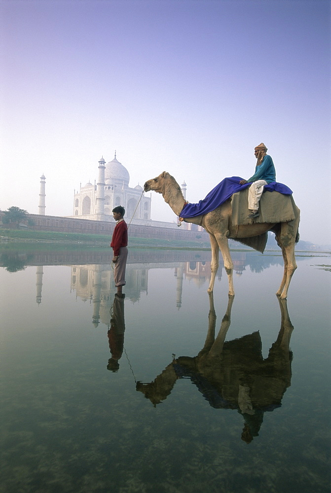 Camel in front of the Taj Mahal and Yamuna (Jumna) River, Taj Mahal, UNESCO World Heritage Site, Agra, Uttar Pradesh state, India, Asia - 252-10730