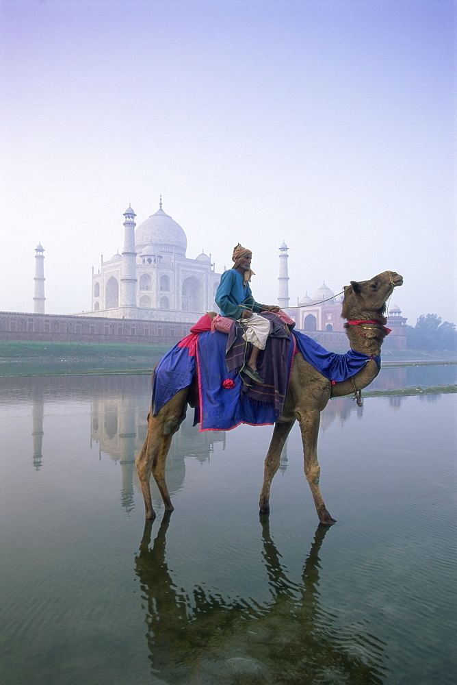 Camel and rider in front of the Taj Mahal and Yamuna (Jumna) River, Taj Mahal, UNESCO World Heritage Site, Agra, Uttar Pradesh state, India, Asia - 252-10732