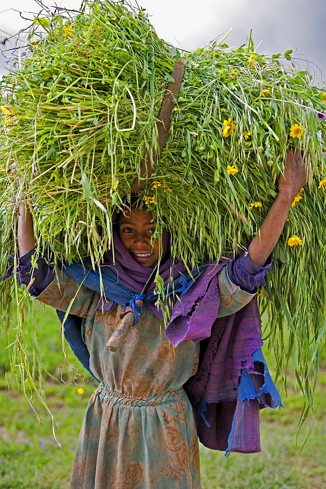 Portait of local girl carrying a large bundle of wheat and yellow Meskel flowers, Simien Mountains, The Ethiopian Highlands, Ethiopia, Africa