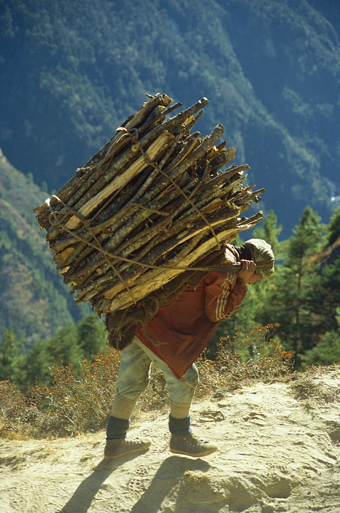 Villager carrying firewood on his back from Trashinga to Namche Bazaar in the Khumbu Himal region of Nepal, Asia