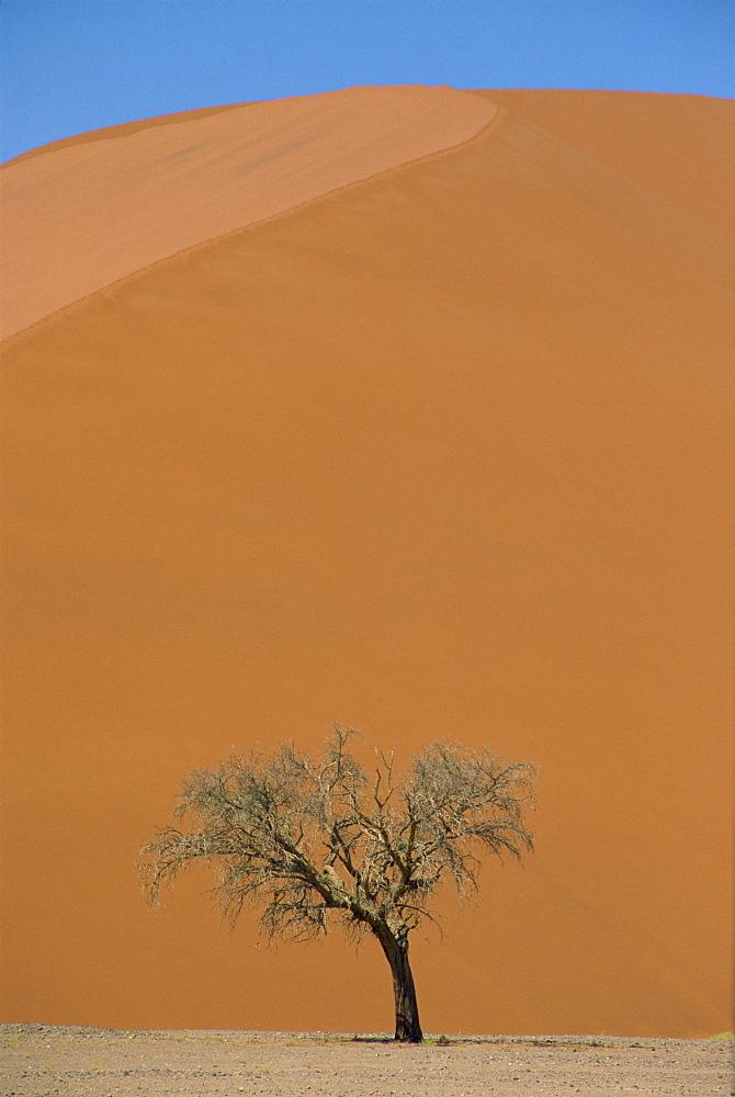 Lone acacia tree against huge sand dune, Sossusvlei Desert, Namibia, Africa - 29-2013