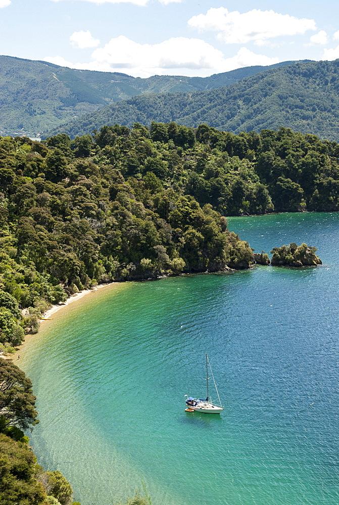 Okiwa Bay, Marlborough Sounds, South Island, New Zealand, Pacific - 29-5380