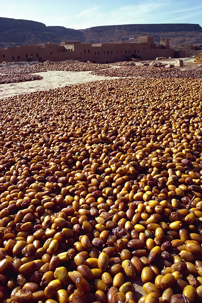 Dates drying near Rissani, Morocco, North Africa, Africa - 3-5335
