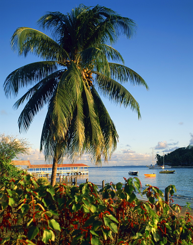 Jetty and palm tree, Villa Bay, Young Island, St. Vincent, Windward Islands, West Indies, Caribbean, Central America