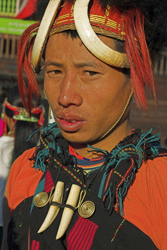 Naga man wearing tiger teeth necklace and headdress of woven cane decorated with wild boar teeth, bear fur, red dyed goats hair, Naga New Year Festival, Lahe village, Sagaing Division, Myanmar (Burma), Asia