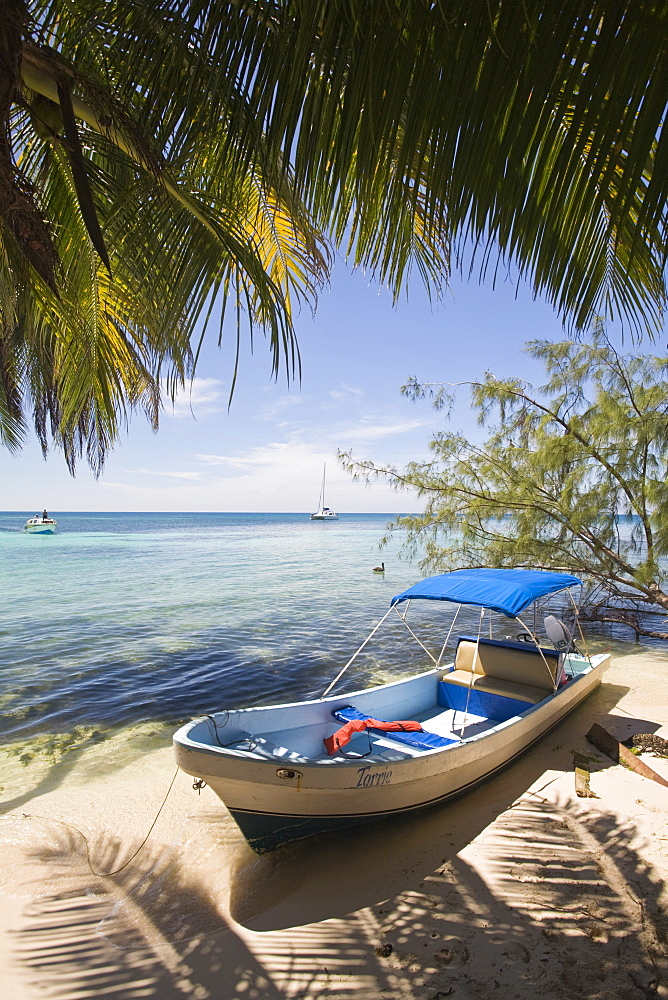 Small boat on beach under coconut palm, Ranguana Caye, Belize, Central America