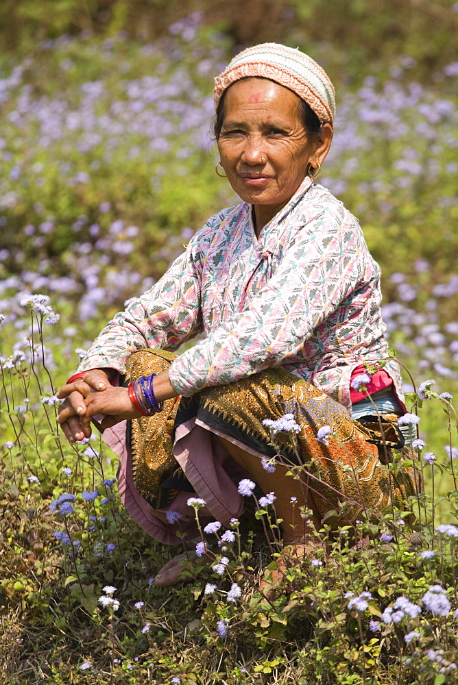 Woman sitting in field of wild flowers, Royal trek, Pokhara, Nepal, Asia