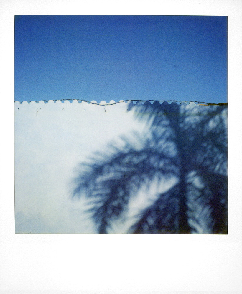 Polaroid of shadow of palm tree on painted blue wall, Plaza Mayor, Trinidad, Cuba, West Indies, Central America
