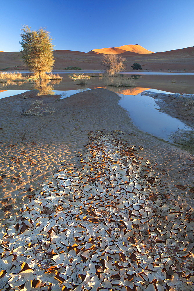 Dunes reflecting in the flooded pan of Sossusvlei caused by rare heavy rainfall, with dried mud in the foreground as the water evaporates, Namib Desert near Sesriem, Namib Naukluft Park, Namibia, Africa