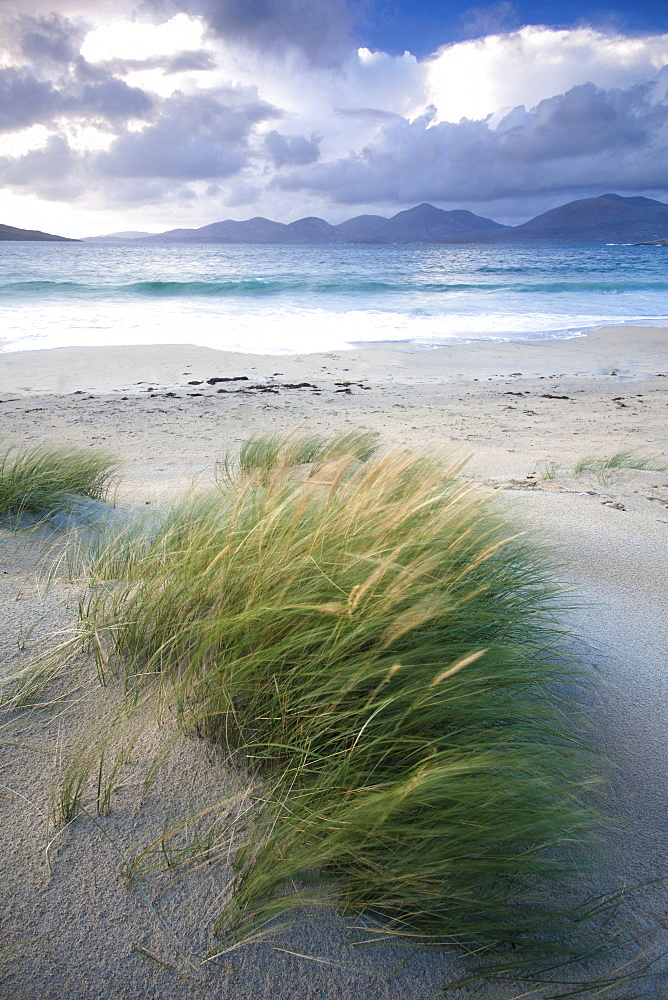 Beach at Luskentyre with dune grasses blowing in the foreground and the hills of North Harris in the distance, Isle of Harris, Outer Hebrides, Scotland
