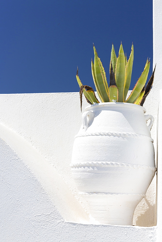Cacti in whitewashed urn against white wall and blue sky, Imerovigli, Santorini, Cyclades, Greek Islands, Greece, Europe