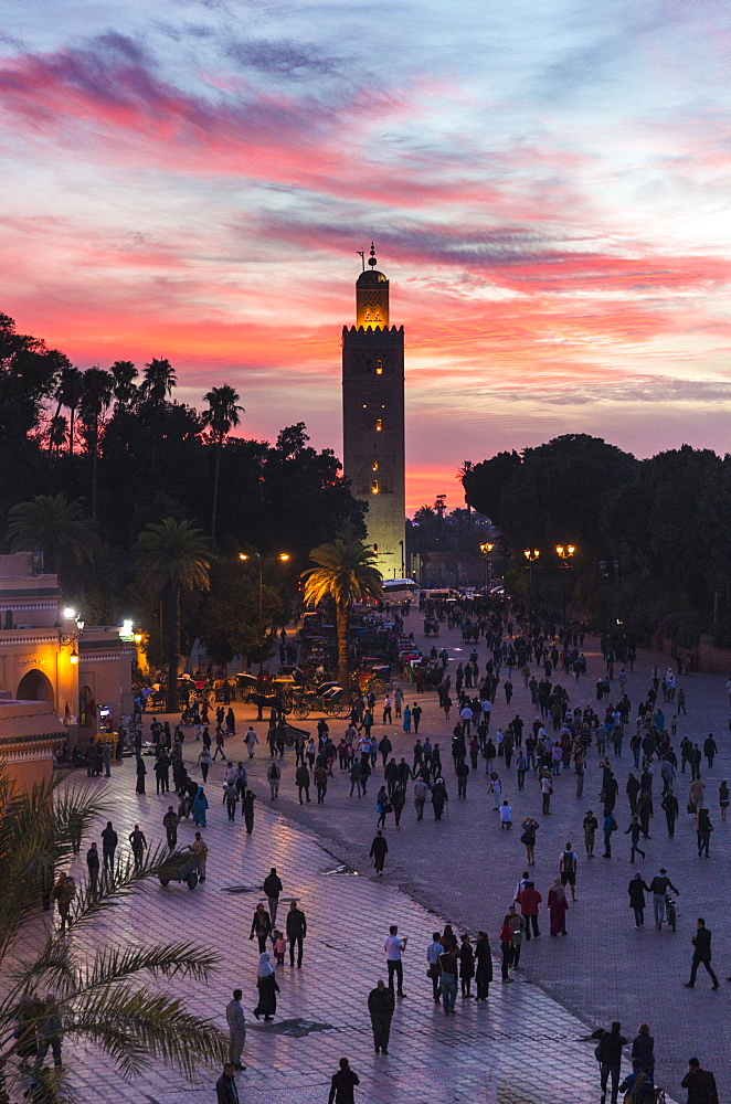 View towards Koutoubia Minaret at sunset from Djemaa el Fna, Marrakech, Morocco, North Africa, Africa - 321-5836