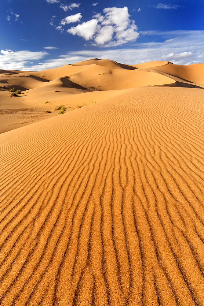 Wide angle view of the ripples and dunes of the Erg Chebbi Sand sea, part of the Sahara Desert near Merzouga, Morocco, North Africa, Africa - 321-5886