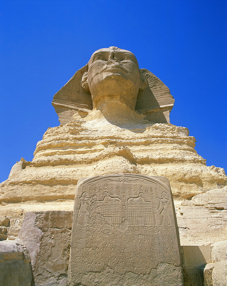 The Great Sphinx and tablet or stela, Giza, UNESCO World Heritage Site, Cairo, Egypt, North Africa, Africa