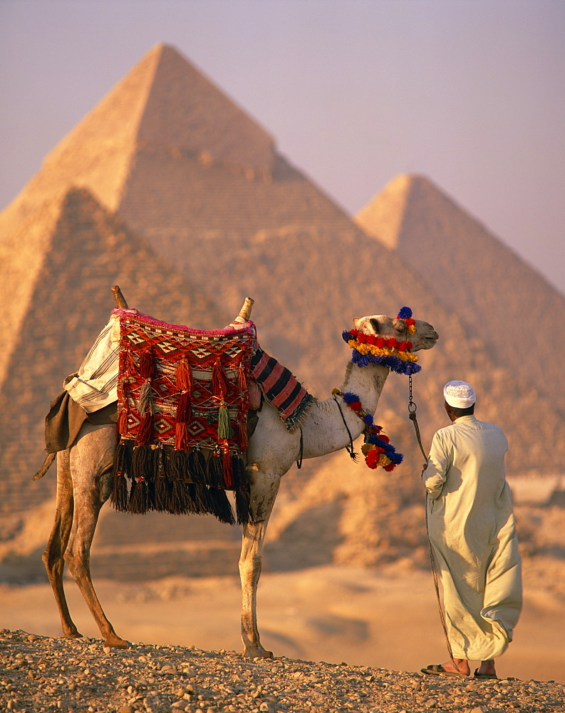 Camel with woven saddle cloth being led towards pyramids by man in white robe in the evening, at Giza, UNESCO World Heritage Site, Egypt, North Africa, Africa