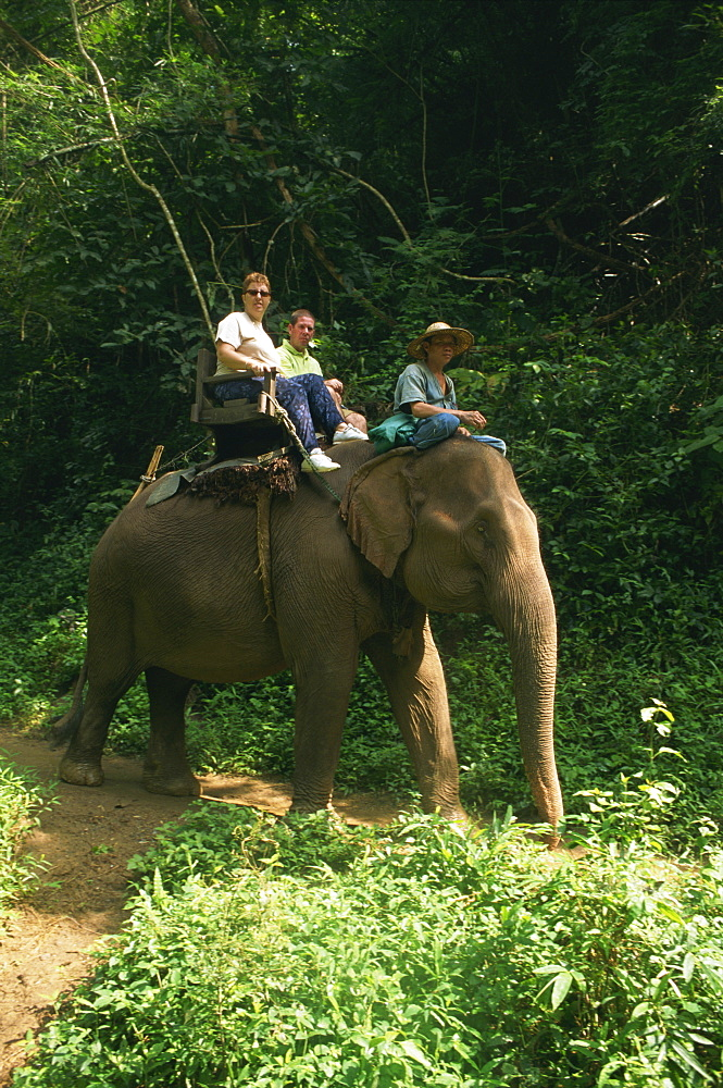 Tourists ride on an elephant at the Chiang Dao Elephant Training Centre at Chiang Mai, Thailand, Southeast Asia, Asia