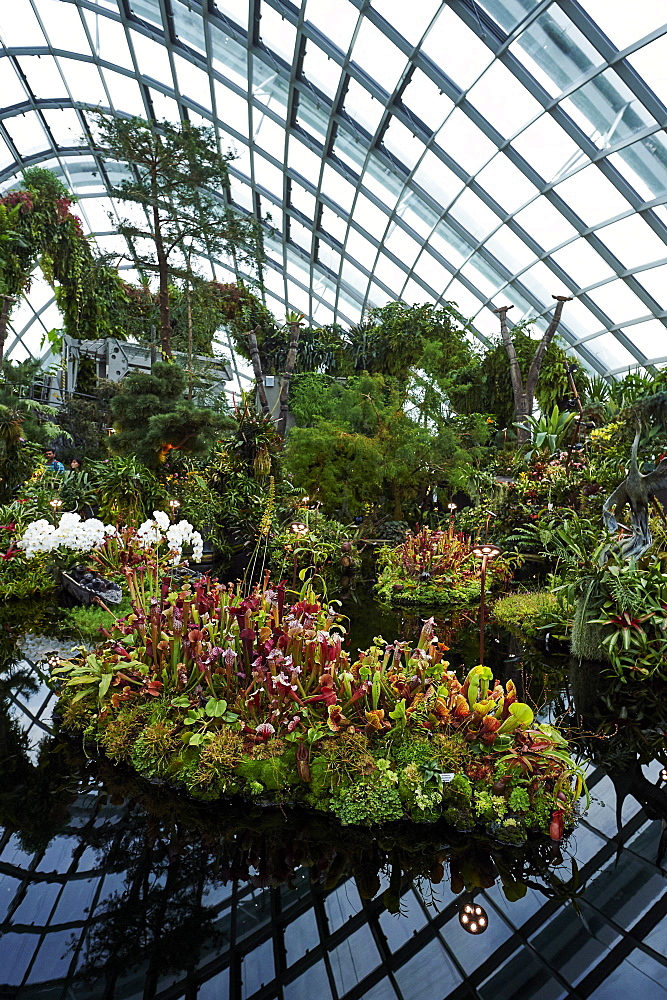 Carnivorous plant display inside Cloud Forest biosphere, Gardens by the Bay, Singapore. - 358-594