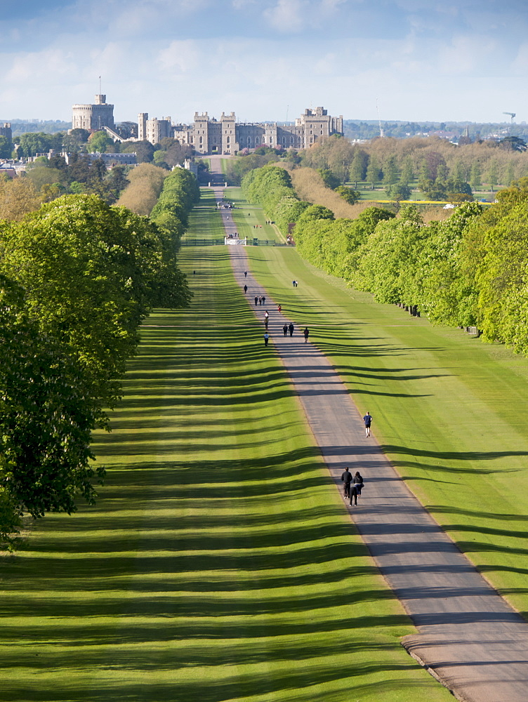 Windsor Castle from Long Walk, Windsor, Berkshire, England, United Kingdom, Europe - 367-6143