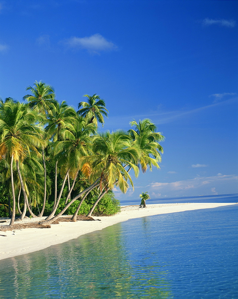 Tropical beach with palm trees at Kudabandos in the Maldive Islands, Indian Ocean, Asia