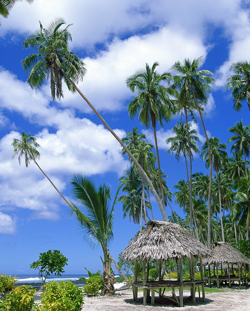 Palm trees and thatched shelters on the beach at Lefaga, Western Samoa, Pacific Islands, Pacific - 383-1203