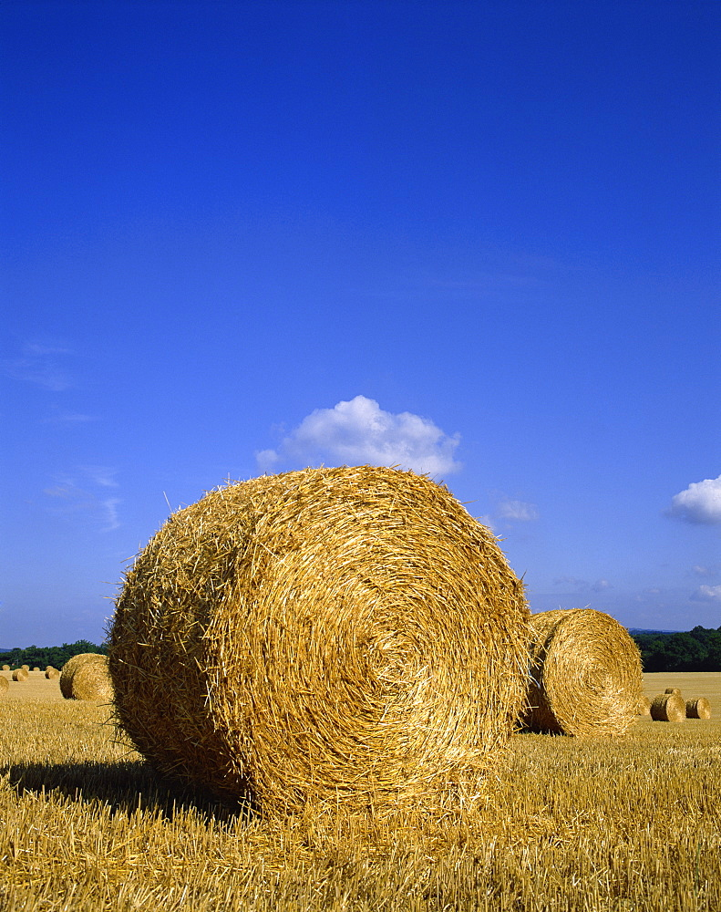 Straw bales in a field after harvesting at Barns Green in Sussex, England, United Kingdom, Europe - 383-142