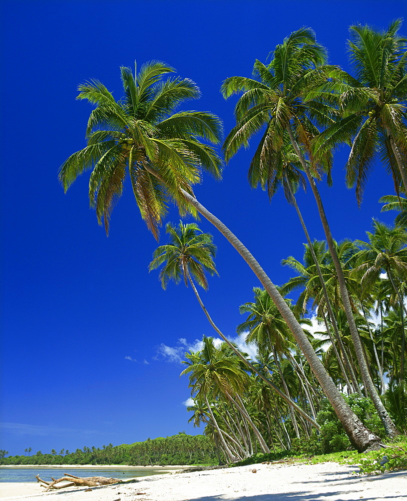 Palm trees on a tropical island beach on the Viti Coral coast in Fiji, Pacific Islands, Pacific - 383-1467