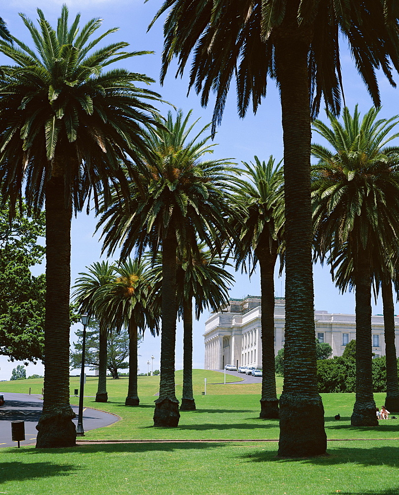 Palm trees and museum, Auckland Domain, Auckland, North Island, New Zealand, Pacific