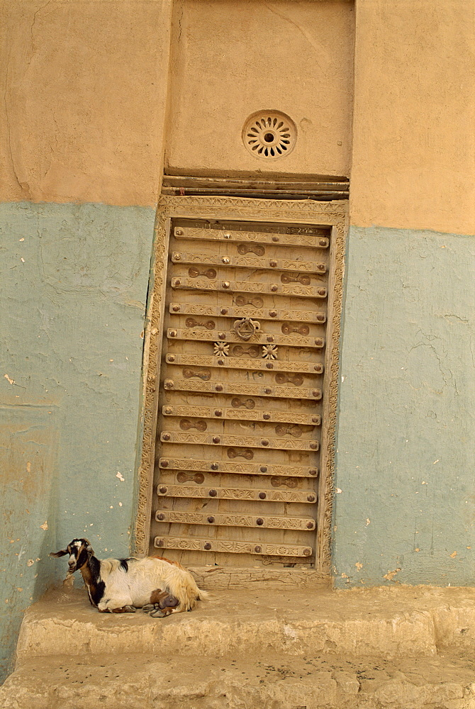 Close-up of a goat in front of an ornate door in the walled city of Shibam, in the Wadi Hadramaut, Yemen, Middle East