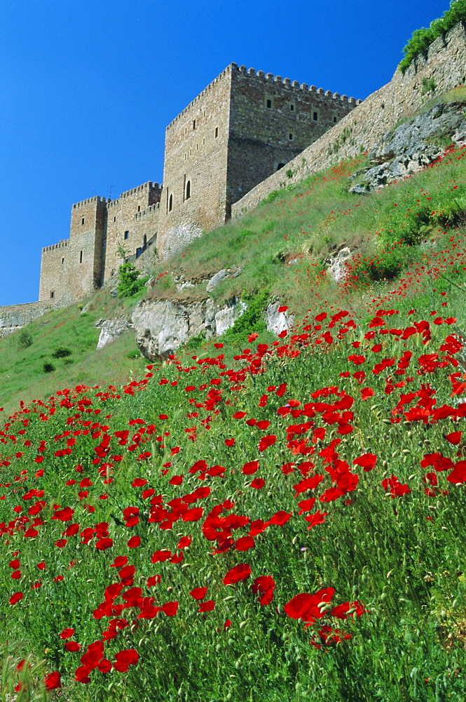 Poppies on hillside beneath the castle (now a Parador), Siguenza, Guadalajara, Castilla la Mancha, Spain, Europe