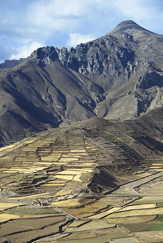 Landscape including Inca terraces in the Colca Canyon, Chivay, Peru, South America