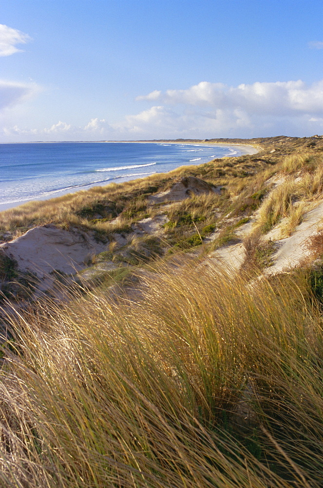 Northern beach, Chatham Islands, Pacific islands, Pacific