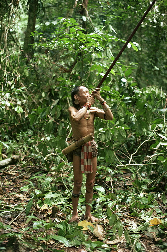 Member of the Penan tribe with blowpipe, Mulu expedition, Sarawak, island of Borneo, Malaysia, Southeast Asia, Asia