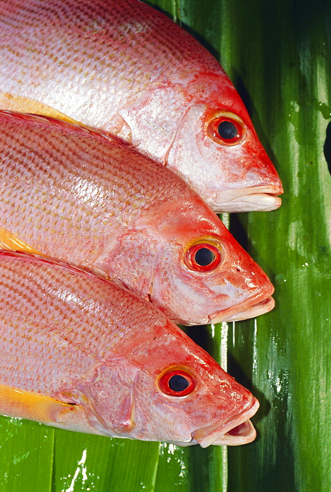 Red Snapper, Fiji, Pacific Islands - 450-1311