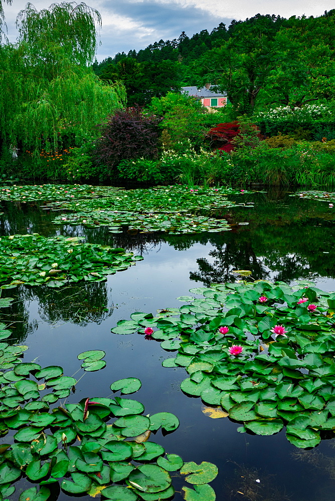 Waterlies in front of Monet's house, Giverny, Normandy, France, Europe