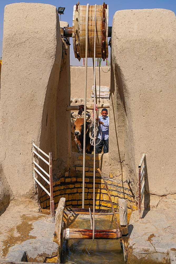 Man and bull draw water from their well, Varzaneh, Iran