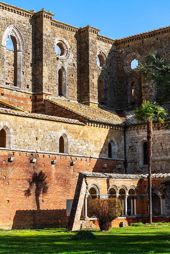 Facade, with palm tree, of roofless 13th Century Gothic, Cistercian Abbey of San Galzano, Chiusdino, Tuscany, Italy