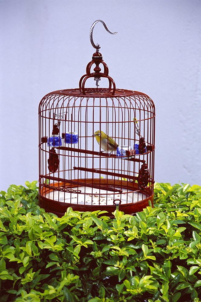 Bird in a cage, Yuen Po Bird Garden, Mong Kok, Kowloon, Hong Kong, China, Asia