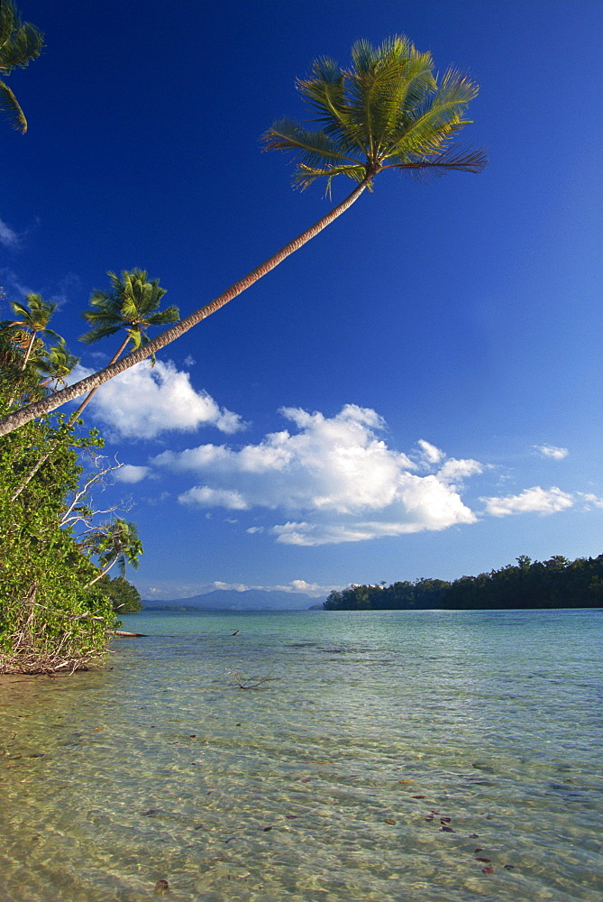 Palm tree over sandy channel at Marovo Lagoon, Solomon Islands, Pacific Islands, Pacific