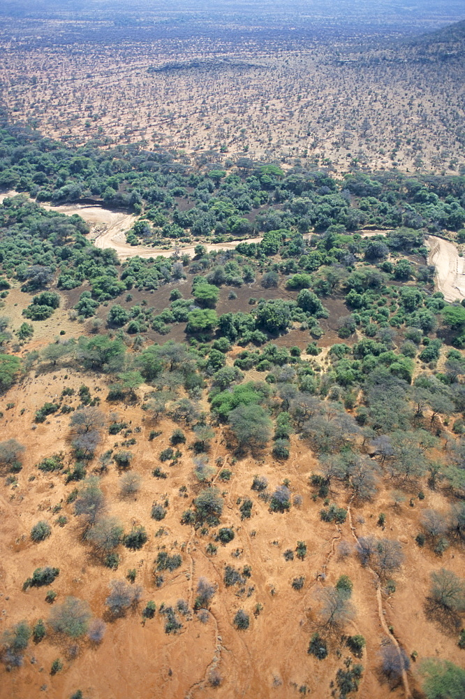 Trees mark a dry riverbed or Lugga which may only flow with water for a few days each year, Matthews Range, Kenya, East Africa, Africa