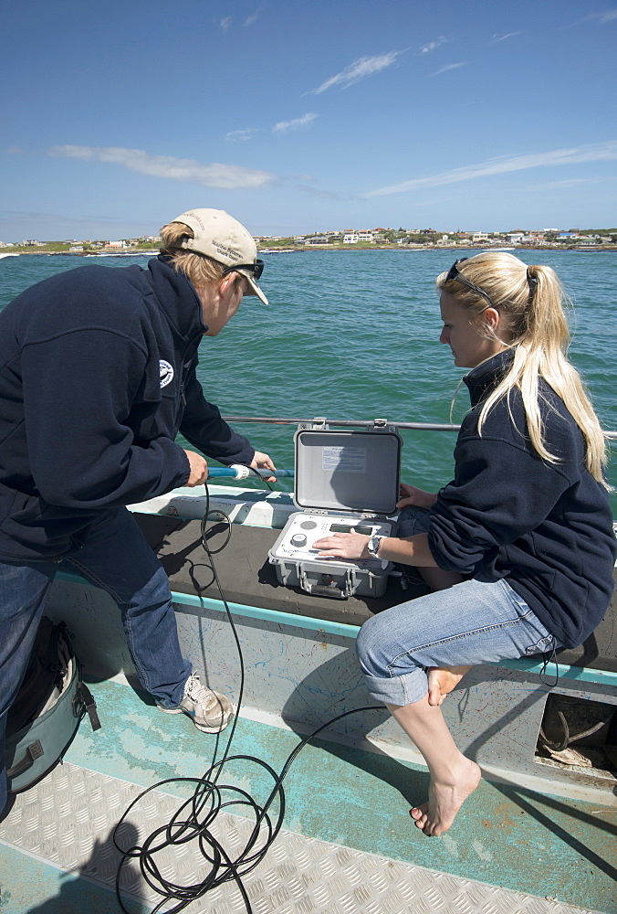 Scientists use hydrophone to track tagged great white shark (Carcharodon carcharias) behaviour, Gaansbai, Western Cape, South Africa, Africa - 465-3111