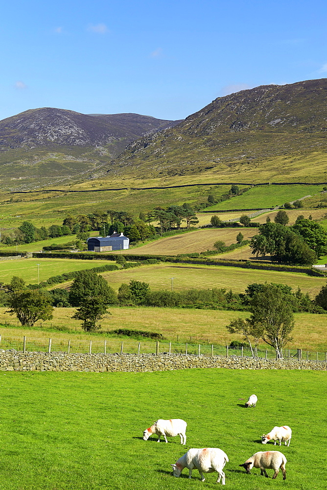 Luke's Mountain, Mourne Mountains, County Down, Ulster, Northern Ireland, United Kingdom, Europe