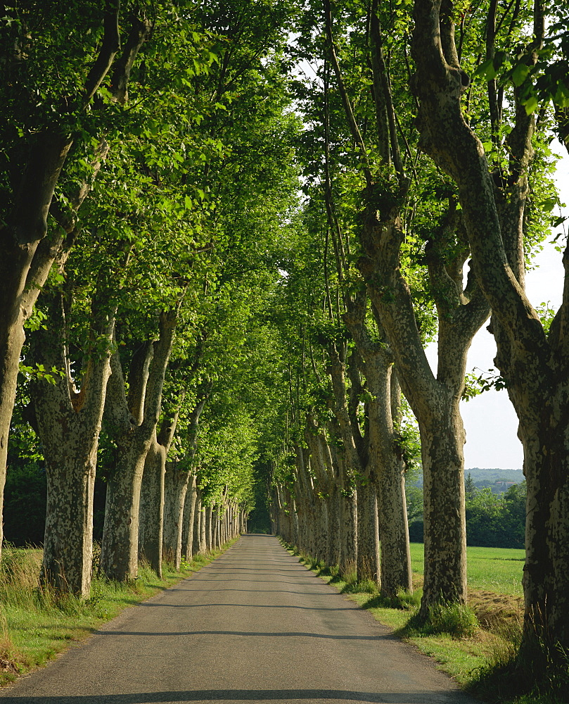 "High Quality Stock Photos of ""straight road"" for Straight Road With Trees  165jwn"