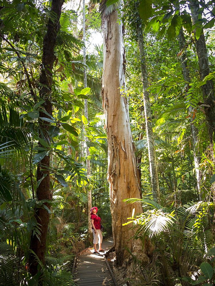 Woman looking at Eucalyptus tree in Flecker Botanic Gardens, Cairns, North Queensland, Australia, Pacific