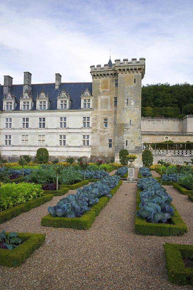 Vegetable garden, Chateau de Villandry, UNESCO World Heritage Site, Indre-et-Loire, Touraine, Loire Valley, France, Europe