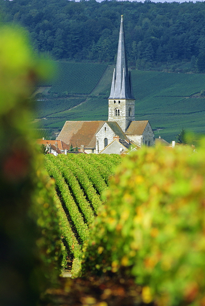Chamery, Montagne de Reims, Champagne, France, Europe