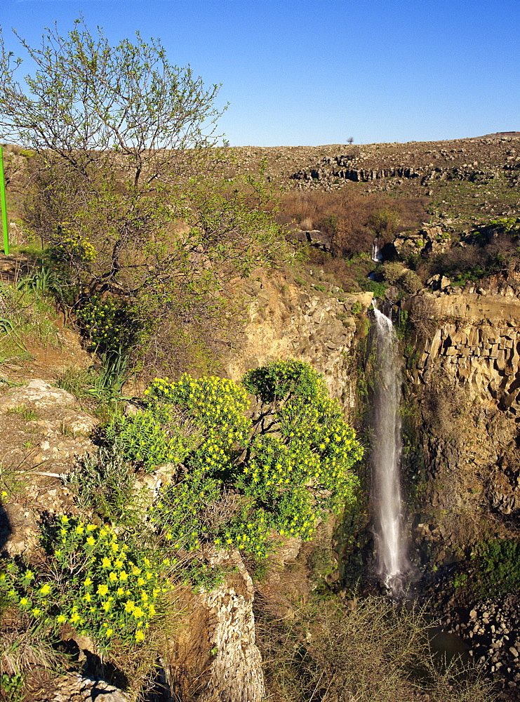 Wild flowers and waterfall in the Gamla Nature Reserve on the Golan Heights, Israel, Middle East