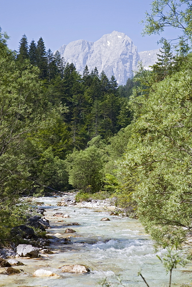 Bistrica River and forest with Stenar mountain beyond in summer, Vrata valley, Triglav National Park, Julian Alps, Mojstrana, Dolina, Slovenia, Europe